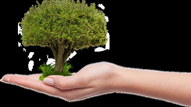 Strom v dlani